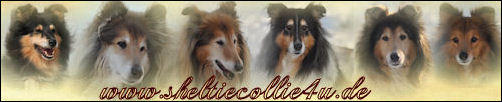 Gästebuch Banner - verlinkt mit http://www.sheltiecollie4u.de